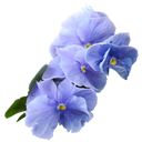 http://www.yoursmileys.ru/ismile/flowers/flower078.png