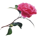 http://www.yoursmileys.ru/ismile/flowers/flower080.png